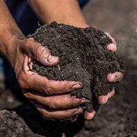 Landscape Compost - Sacramento, Ca